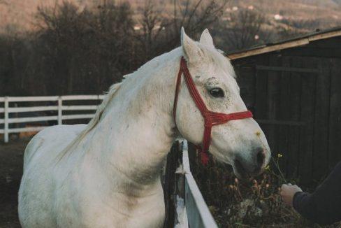 andrica-ranc-drina-smestaj-bajina-basta (16)