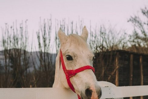 andrica-ranc-drina-smestaj-bajina-basta (3)