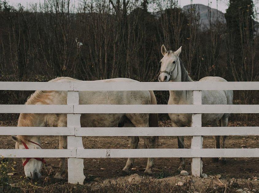 andrica-ranc-drina-smestaj-bajina-basta (5)
